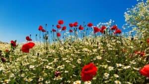 Kraeuter Und Blumen