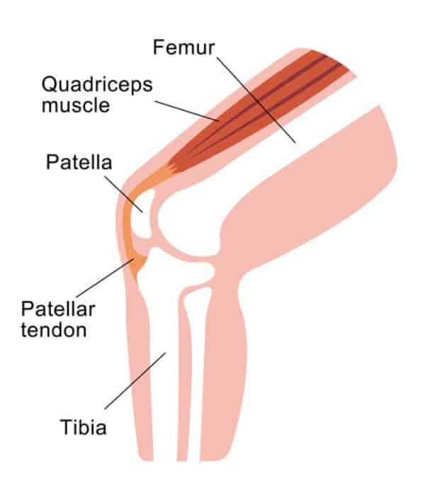 Kniegelenk Anatomie 500Px