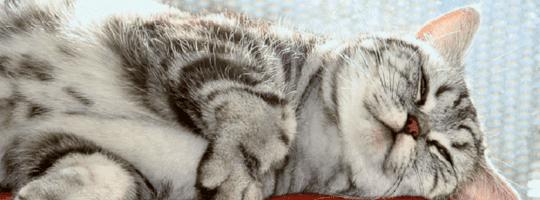 Amun Katze als Titelbild
