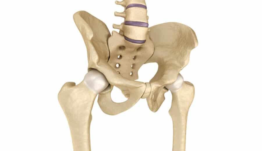 hanche (squelette)