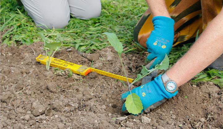 Gartenarbeit Anpflanzen