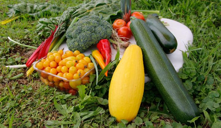 Gartenarbeit Ernte