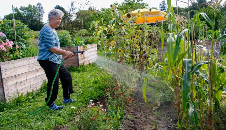 Gartenarbeit Waessern