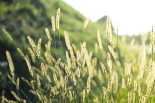 Grass 1209588