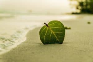 Beach 394503